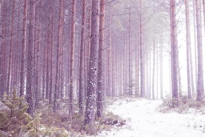 mpj-romantic-forest-1-jpg