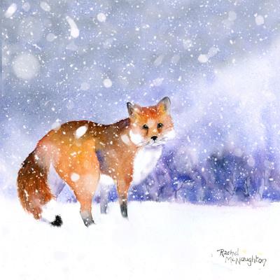 snowy-fox-jpg