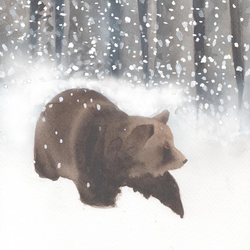 forest snow christmas bear.jpg