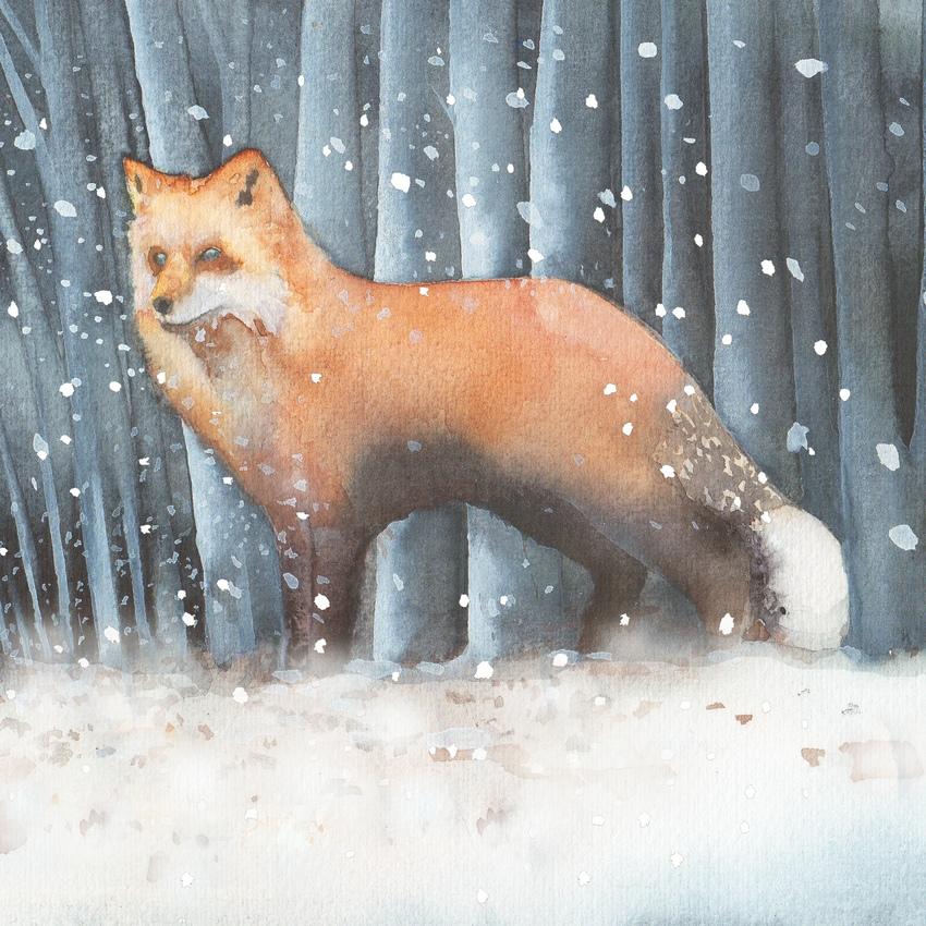 fox snow cristmas UK animals.jpg