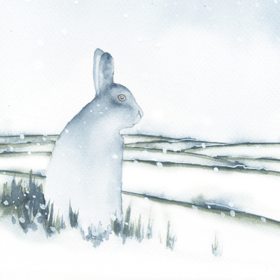 hare-snow-cristmas-uk-animals-jpg