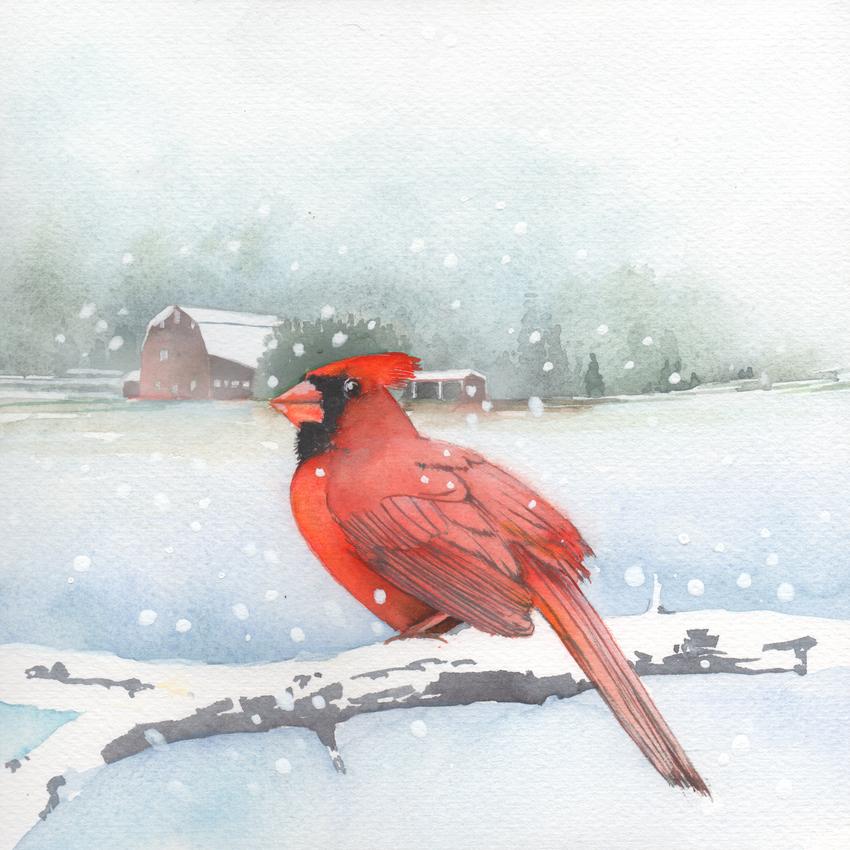 red barn snow christmas cardinal.jpg