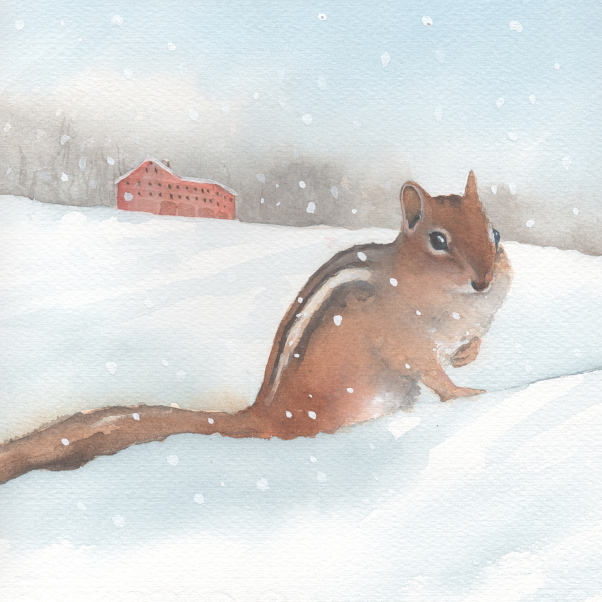 red barn snow christmas chipmunk.jpg