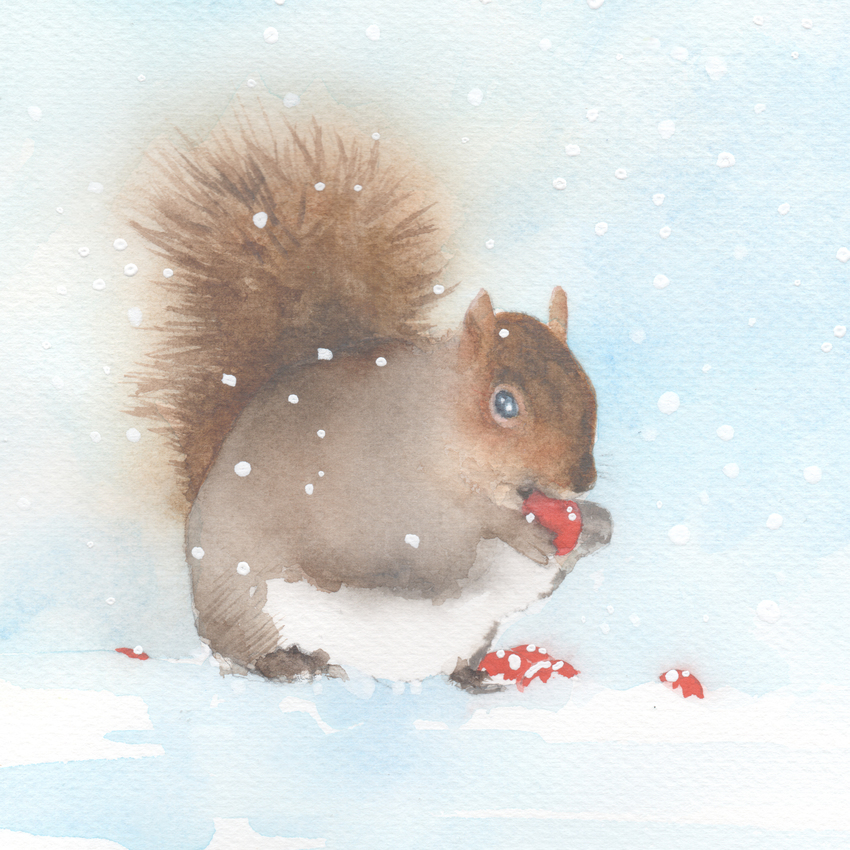 red berries snow christmas grey squirrel.jpg