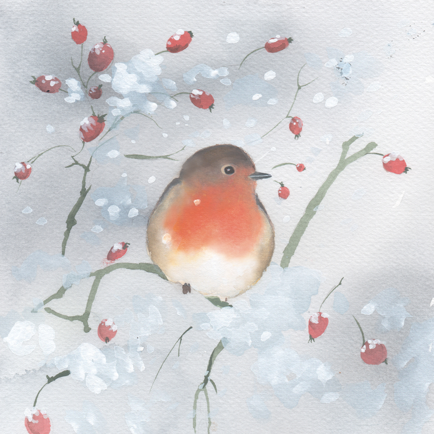 robin rose hips snow cristmas UK animals.jpg