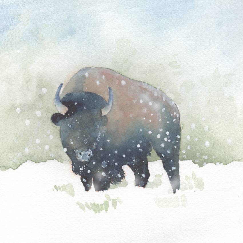 snow christmas bison.jpg