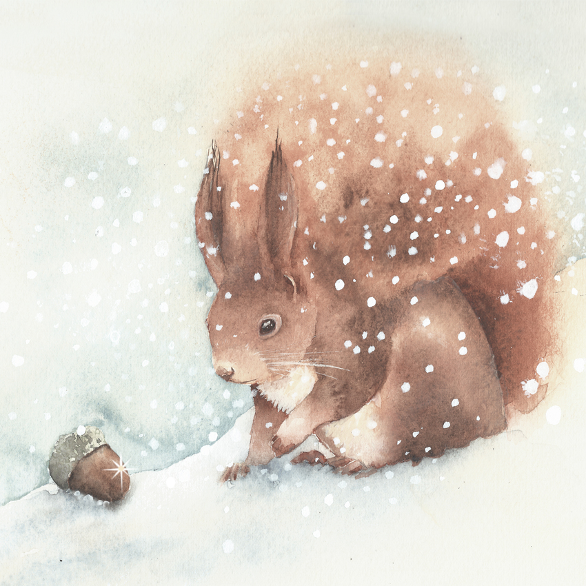 Squirrel snow cristmas UK animals.jpg