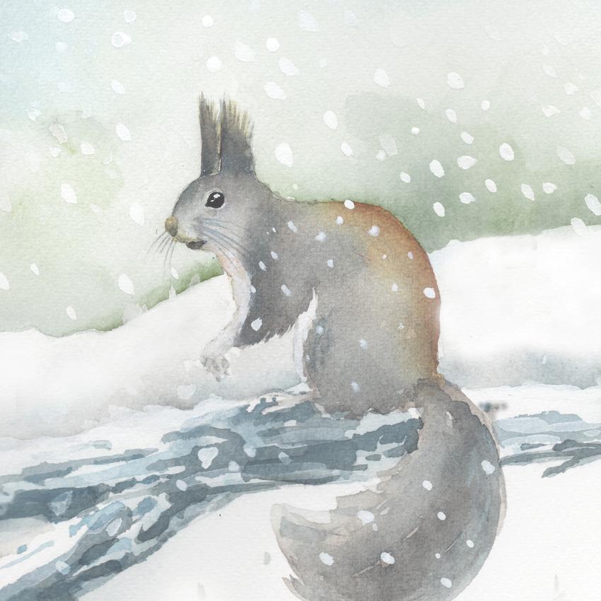 t abert's squirrel snow christmas.jpg