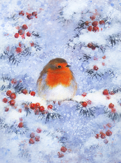 robin-on-snow-covered-yew-branch-jpg