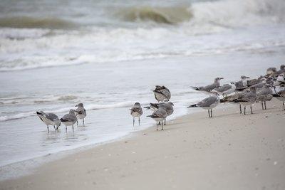 seabirds-11-13-036-jpg