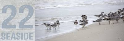 seabirds-11-13-036-1-jpg