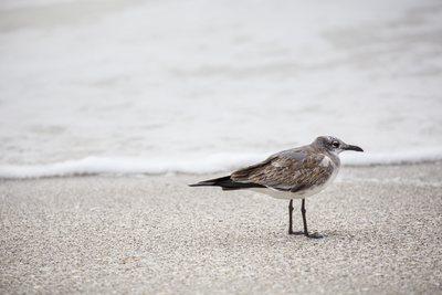 seabirds-11-13-037-jpg