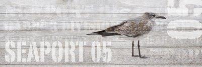 seabirds-11-13-037-2-jpg