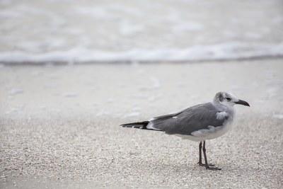 seabirds-11-13-038-jpg