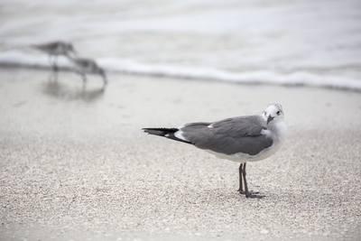 seabirds-11-13-039-jpg