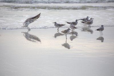seabirds-11-13-067-jpg