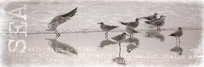 seabirds-11-13-067-1-jpg