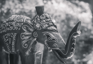 grey-elephant-india-jpg
