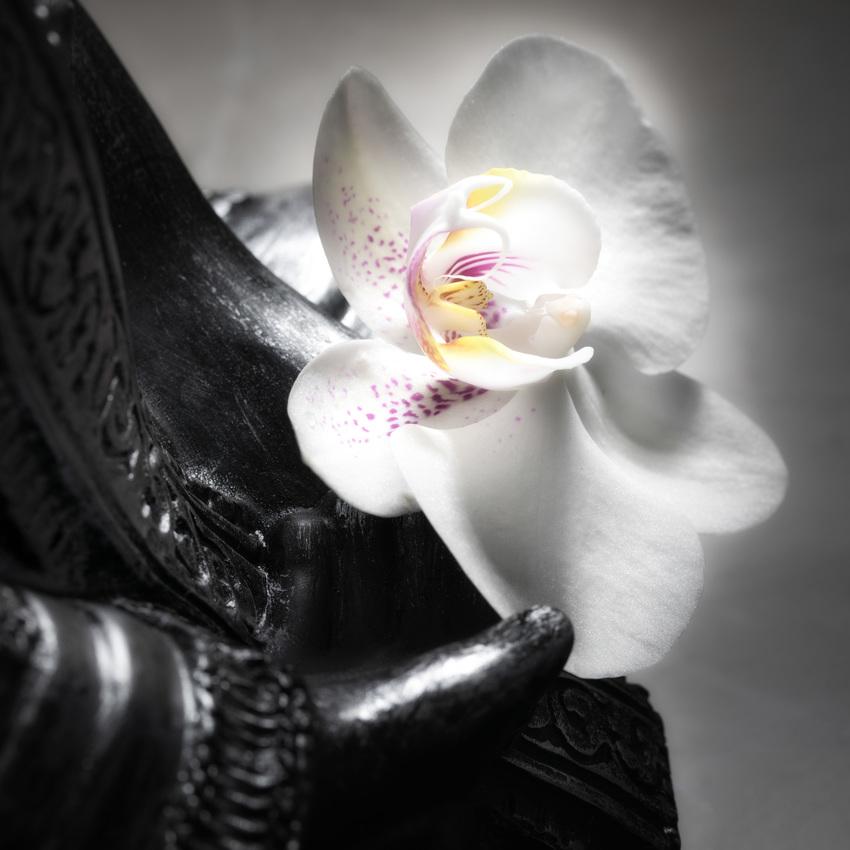 Buddha_11_17_005.jpg