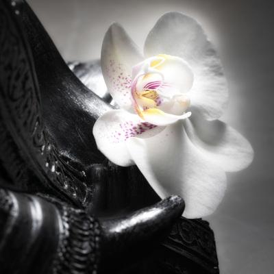 buddha-11-17-005-jpg