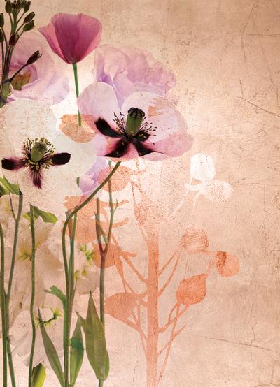 lsk-floral-meadow-poppy-foliage-jpg