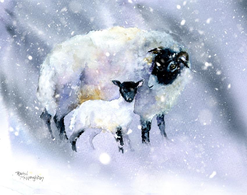 Ewe and Lamb in snow.jpg