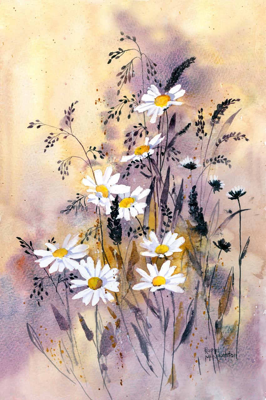 Daisy meadow.jpg