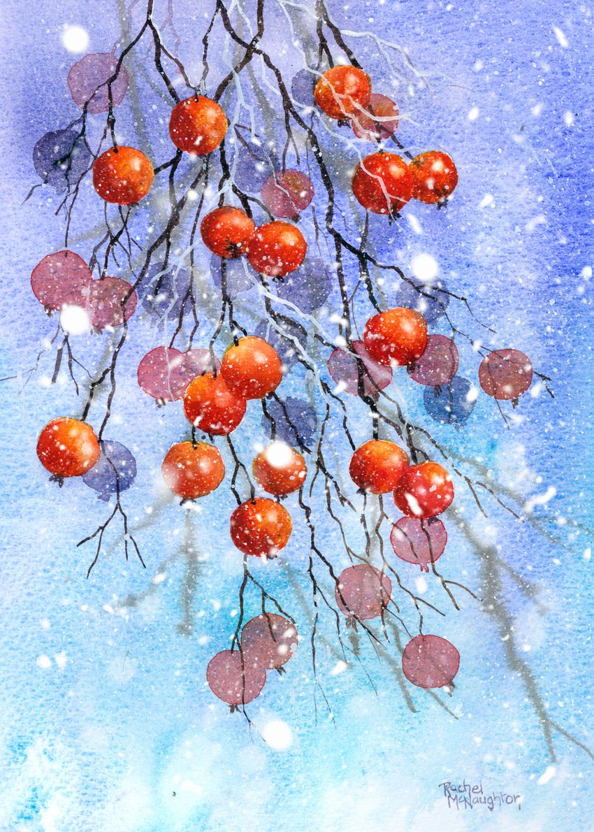 Snowy berries.jpg