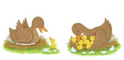 duck-duckling-jpg
