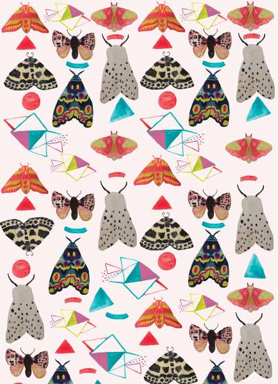 rachaelschafer-insects-pattern-moths-geometrics-jpg