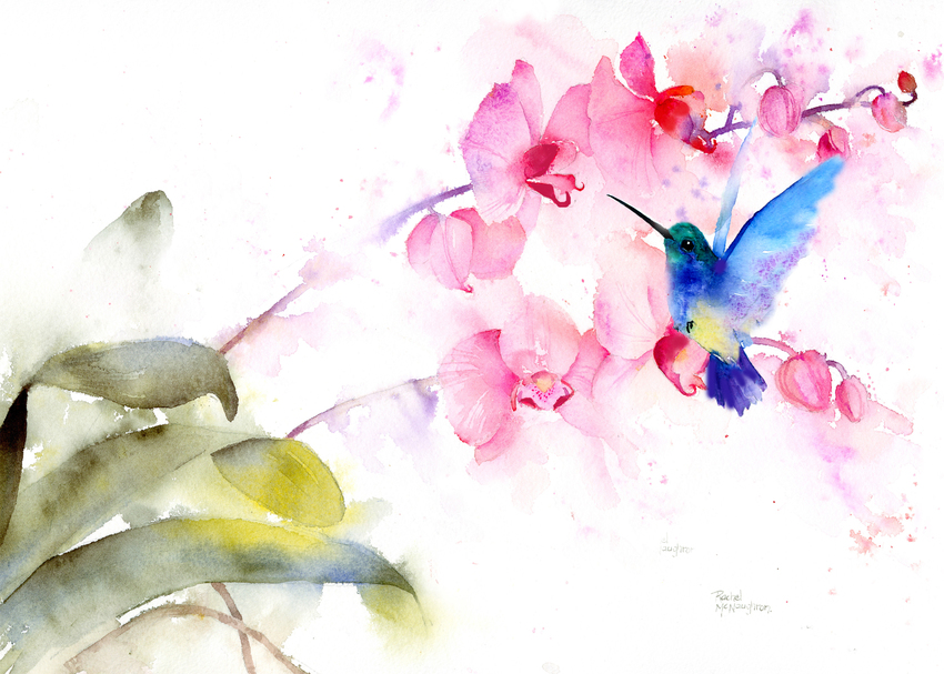 Pink orchid and hummingbird.jpg