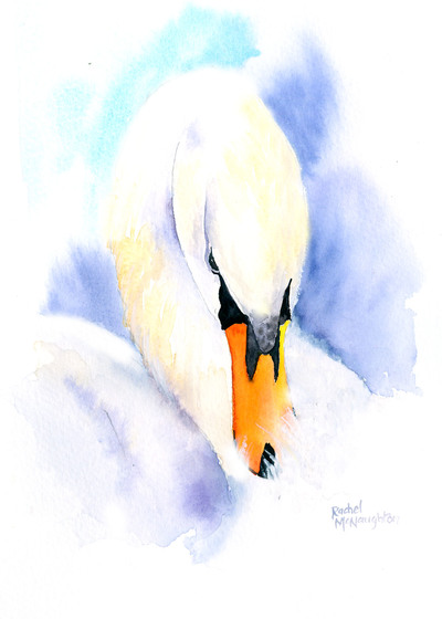 white-swan-jpg