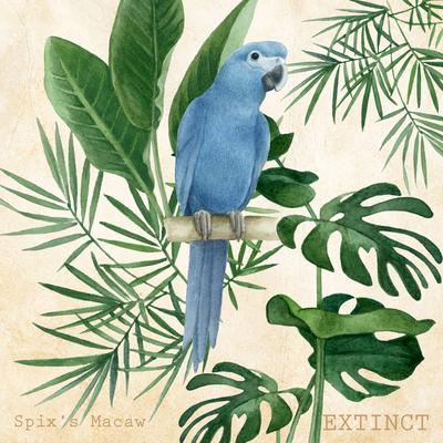 advocateart-la-brazil-extinct-blue-macaw-jpg
