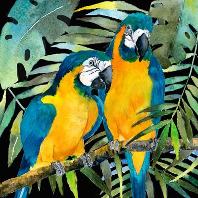 advocateart-rachelmcn-brazilbrief-macaws-jpg