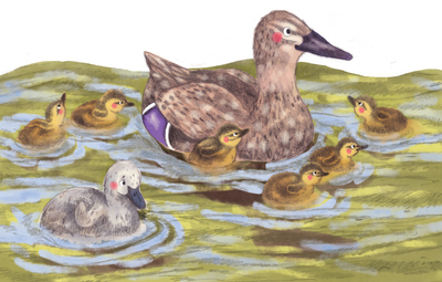 ducks-water-mother-erinbrown-jpg