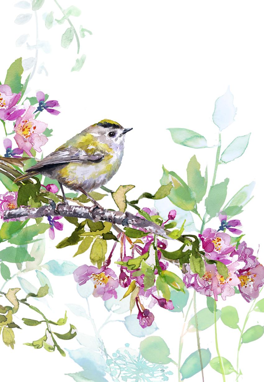BIRD ON BLOSSOM BRANCH 2.jpg