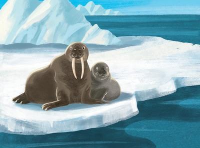 sylwia-filipczak-walruses-jpg
