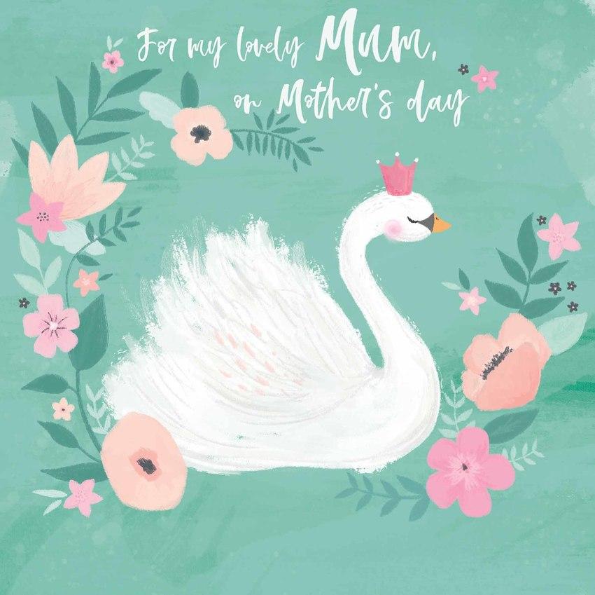 mum swan.jpg