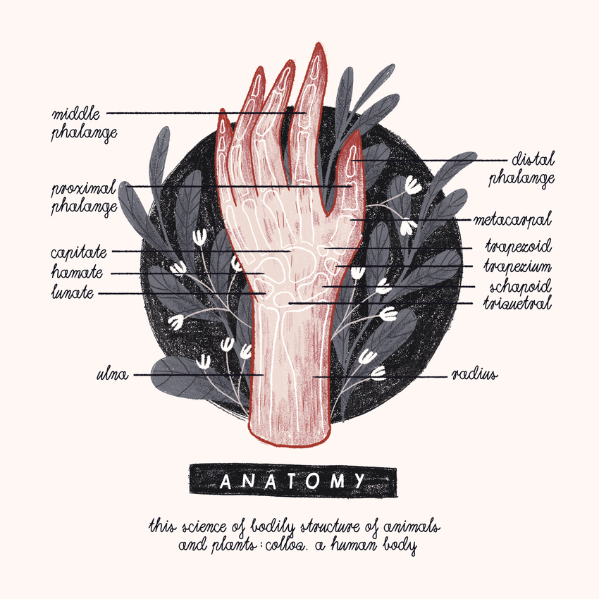 A IS FOR ANATOMY - alphabet_anatomy_lettering_hand.jpg