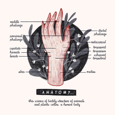 a-is-for-anatomy-alphabet-anatomy-lettering-hand-jpg