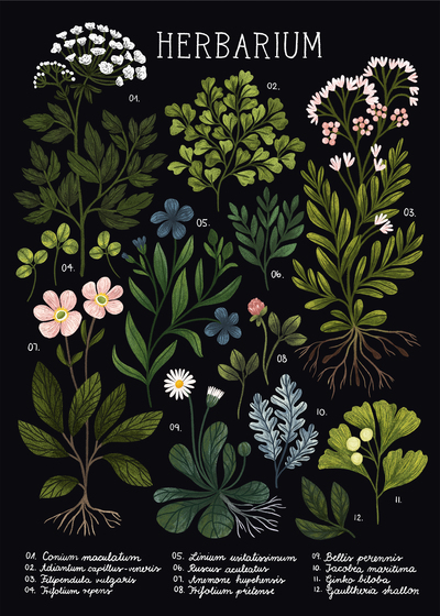 herbarium-poster-black-botanical-flowers-leaves-plants-jpg