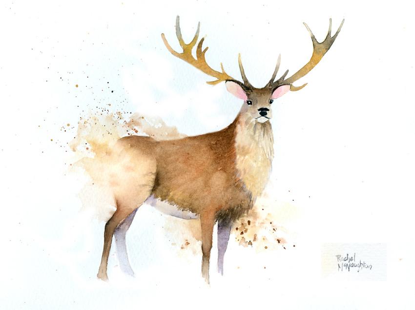 Splashy red deer colour.jpg