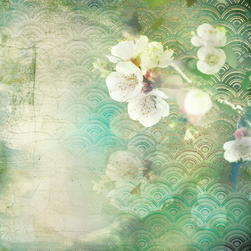 LSK Satori Living Cherry Blossom.jpg