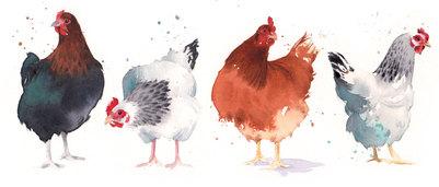 hens-jpg