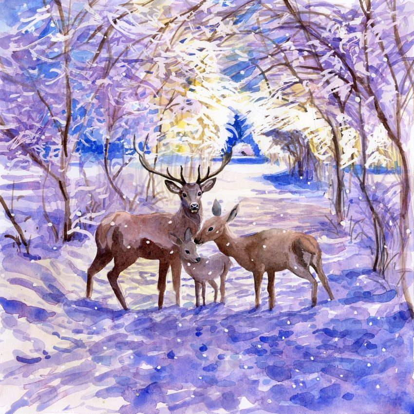 e corke_christmas_deer_snow_woodland.jpg
