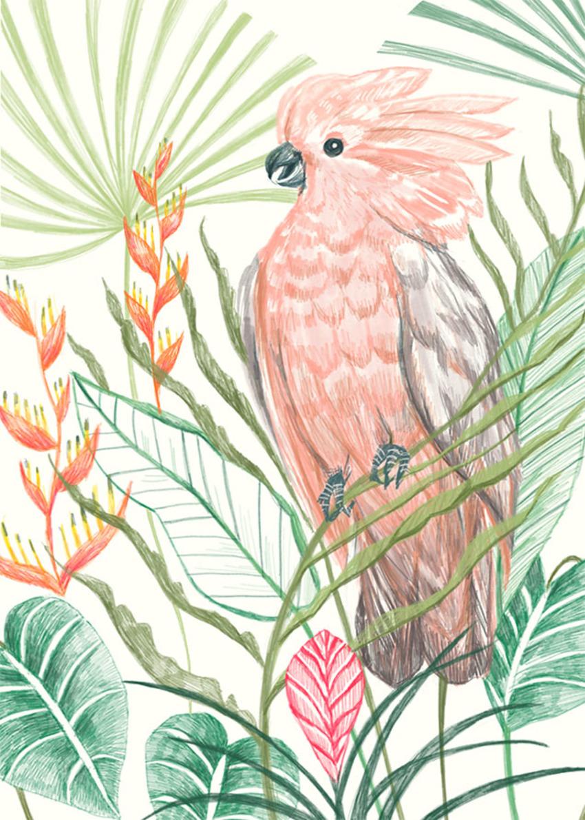 Key Largo_Galah Bird.jpg