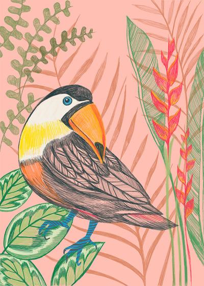 key-largo-hornbill-bird-jpg