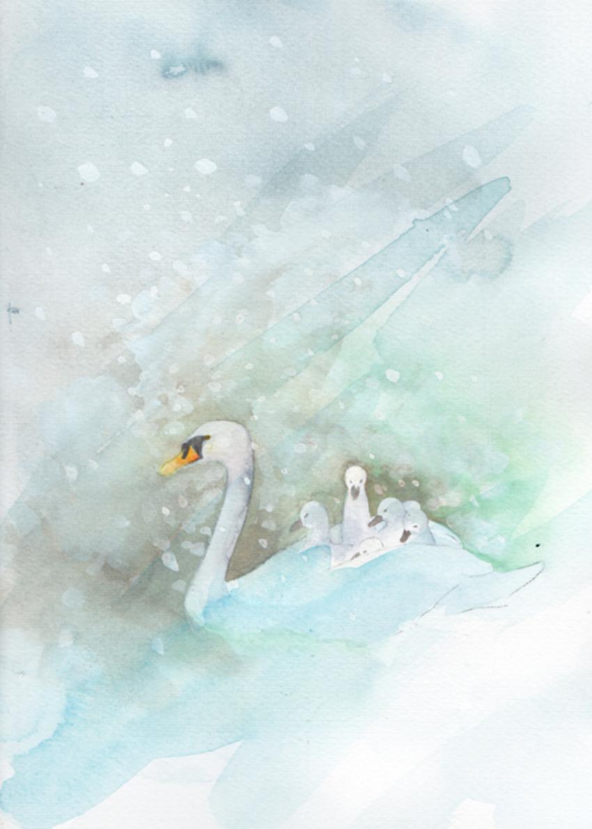 swan_ cygnets_snow_small.jpg