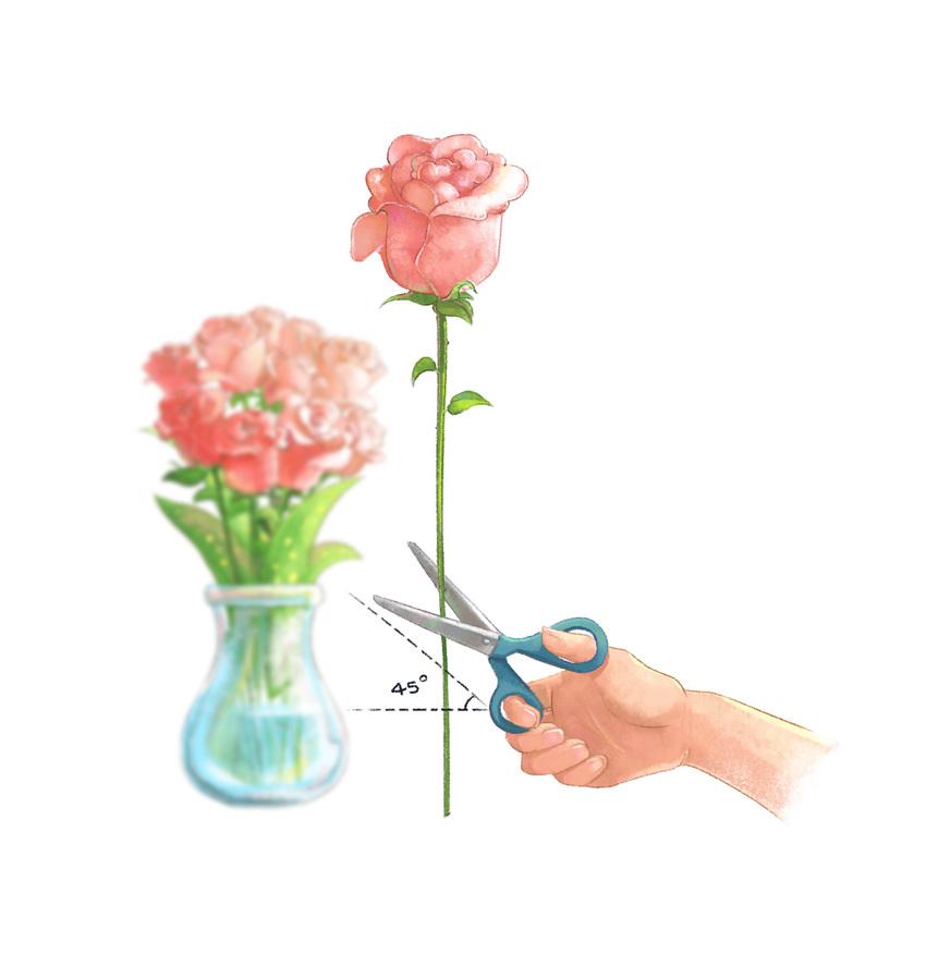illustration-for-flower-shop-2.jpg