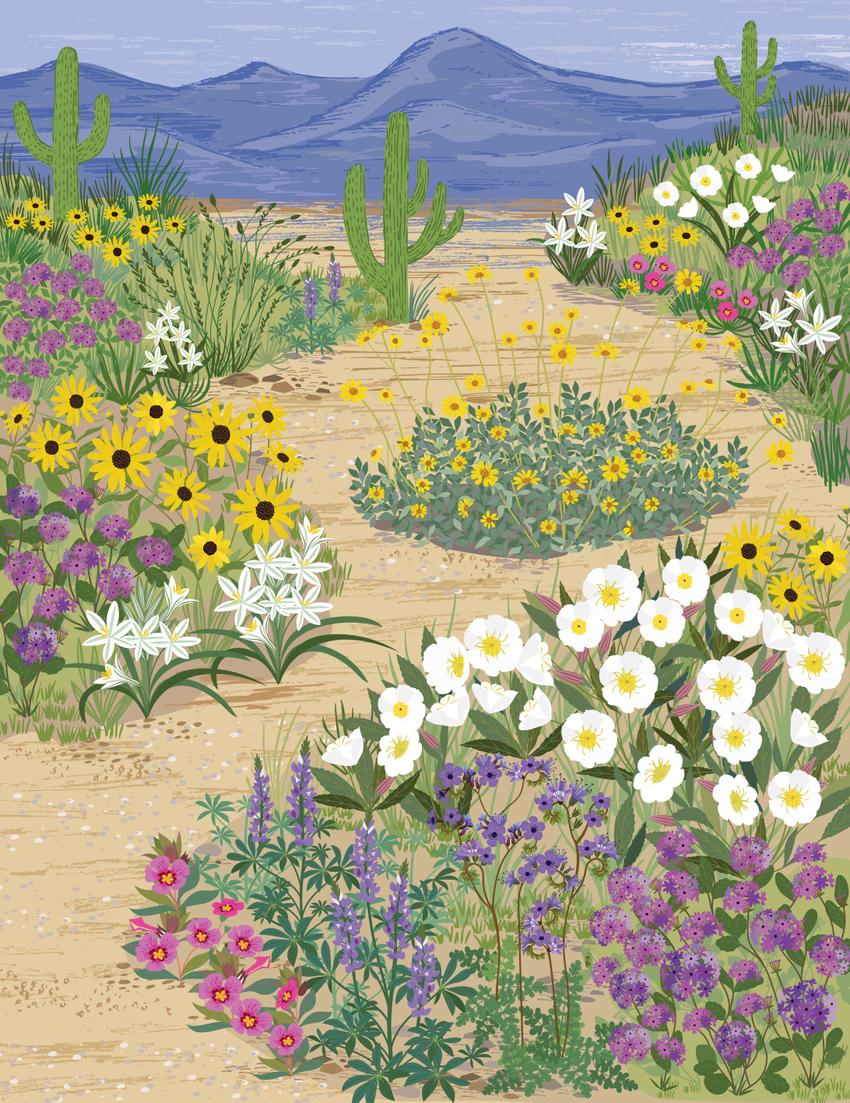 BethanJanine_Book_Desert_Floral.jpg